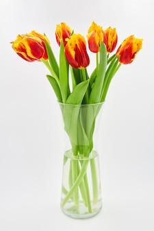 Tulipes rouges et jaunes dans un vase en verre sur fond blanc