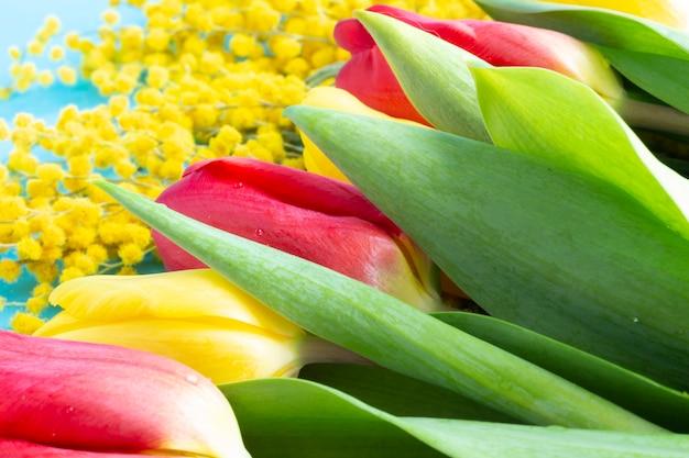 Tulipes rouges et jaunes et mimosa jaune sur fond bleu. fleurs de printemps pour le 8 mars. bannière de fleurs