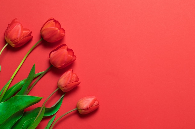 Tulipes rouges sur le rouge avec un espace pour le texte