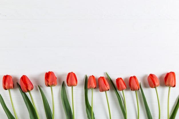 Tulipes rouges sur tableau blanc, cadre, texte vierge. copiez l'espace.