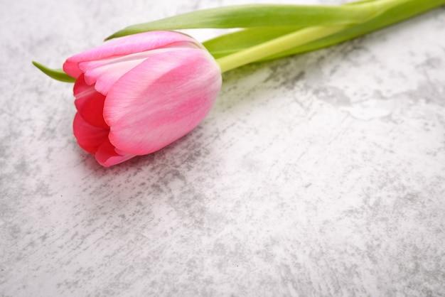 Les tulipes sont brillantes, fraîches, roses