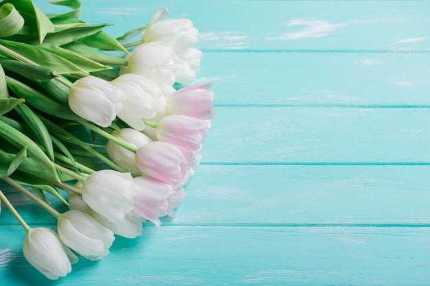 Tulipes très tendres roses et blanches sur fond en bois bleu vert