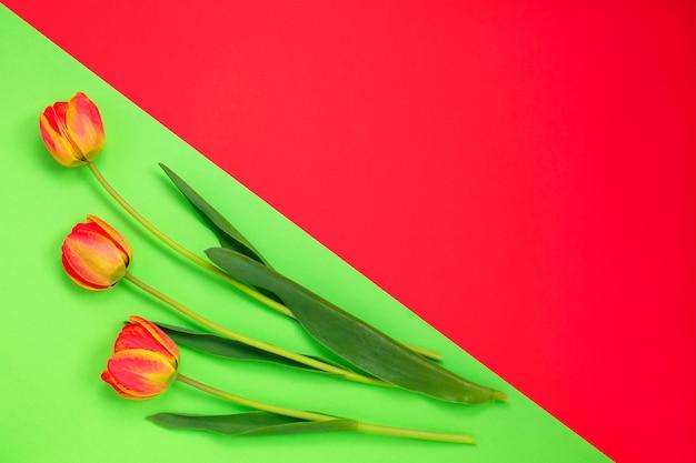 Tulipes trois couleurs