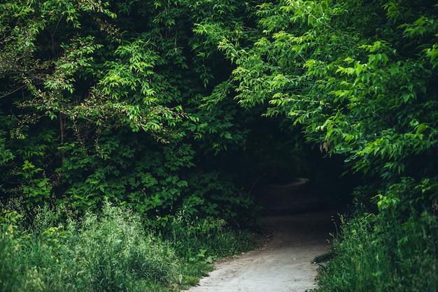 Tunnel dans de beaux buissons.