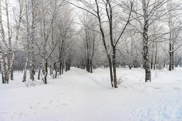 Tunnel enneigé entre les branches des arbres dans un parc se bouchent. blanc neigeux avec allée dans le bosquet. chemin parmi les arbres d'hiver avec givre pendant la chute de neige. chute de neige paysage d'hiver atmosphérique.