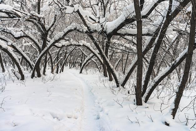 Tunnel enneigé entre les branches des arbres dans un parc se bouchent