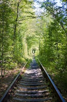 Tunner vert en forêt. lieu d'amour.