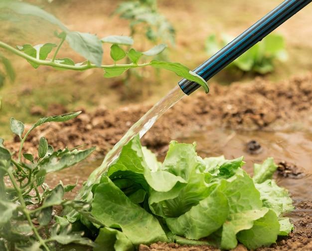 Tuyau d'arrosage de salade verte