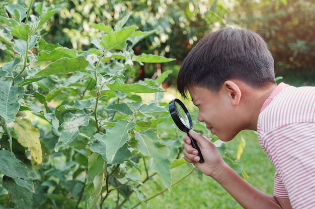 Tween asian boy regardant les feuilles à travers une loupe, l'éducation montessori homeschool, la phytopathologie
