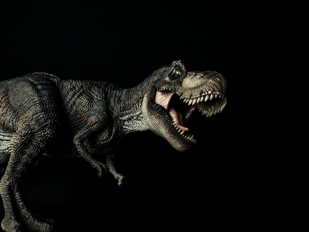 Tyrannosaure t-rex dinosaure sur fond noir