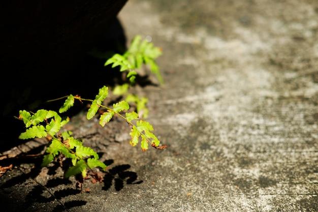 Usine de fougères poussant sur du béton avec lumière du soleil dans le jardin