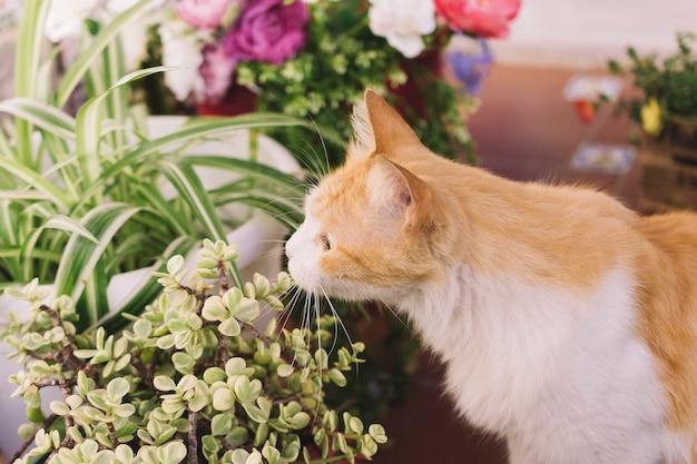Usine d'odeur de chat