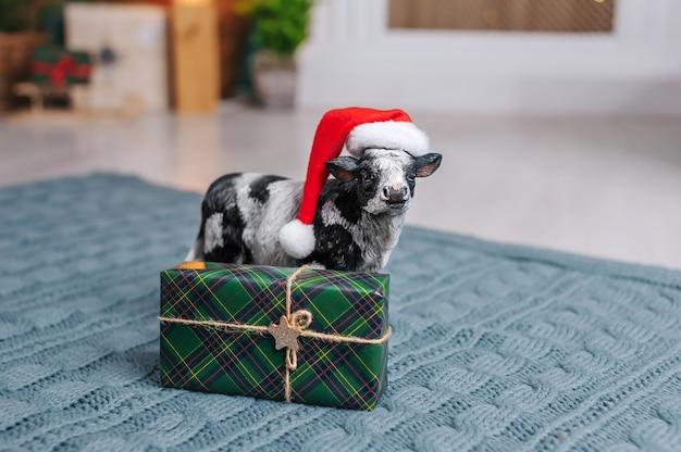 Une vache dans un chapeau du nouvel an porte un traîneau avec des cadeaux dans le contexte de l'intérieur
