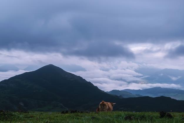 Vache à la montagne