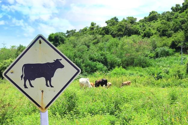 Vaches, paître, dans, vert, pré, et, signe vache