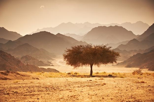 Vallée dans le désert avec un acacia avec des montagnes