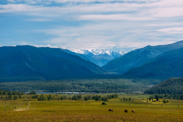 Vallée de montagne avec des chevaux, paysage panorama d'automne doré, vue sur le beluha par temps ensoleillé, république de l'altaï, russie