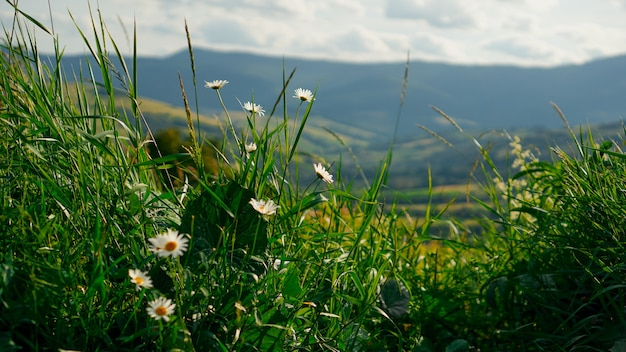Vallée de la montagne. paysage d'été naturel. fond de bannière horizontale