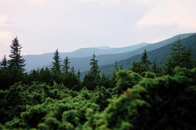 Vallée de la montagne pendant le lever du soleil paysage d'été naturel.