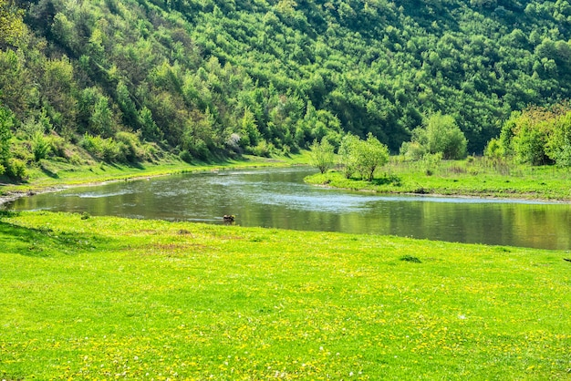 Vallée De La Rivière Verte Couverte D'herbe Et De Forêt Sur Les Rives Photo Premium