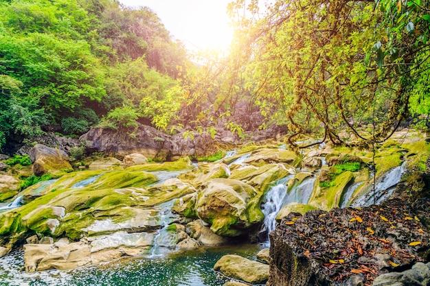 Vallées de mousse fontaines forêts laisse la géologie