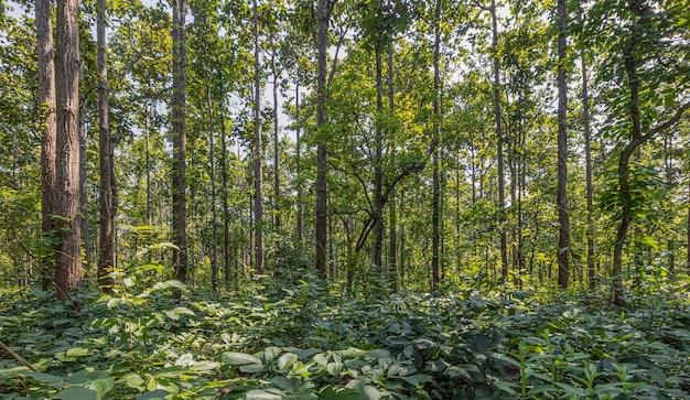Variété d'arbres le long du chemin dans la province de mae hong son, thaïlande