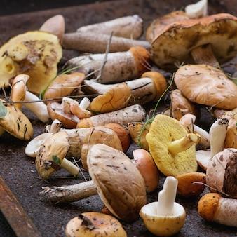 Variété de champignons forestiers