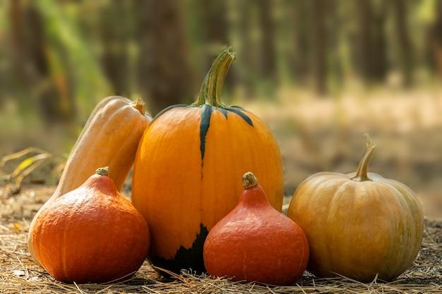 Variété de citrouilles à l'extérieur sur un fond de forêt d'automne