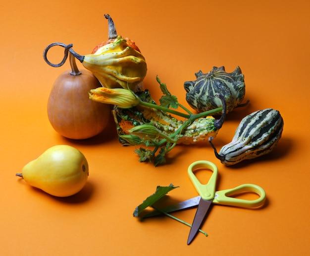 Une variété de citrouilles, poires, une tige de citrouilles et fourreau sur fond orange composition d'automne