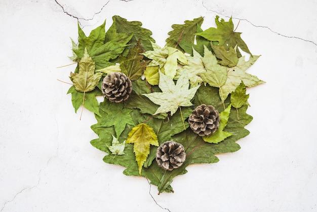 Variété de feuilles avec des cônes