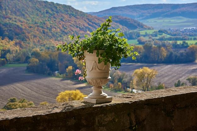 Vase ancien aux géraniums sur fond d'arbres d'automne