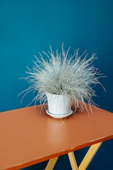 Vase de blé séché table en bois ray-grass raaigras herbe pot de fleurs orange bleu mur blanc gris wan design concept intérieur flétri