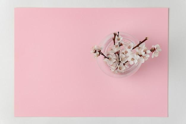 Vase avec des branches fleuries d'un abricotier sur rose