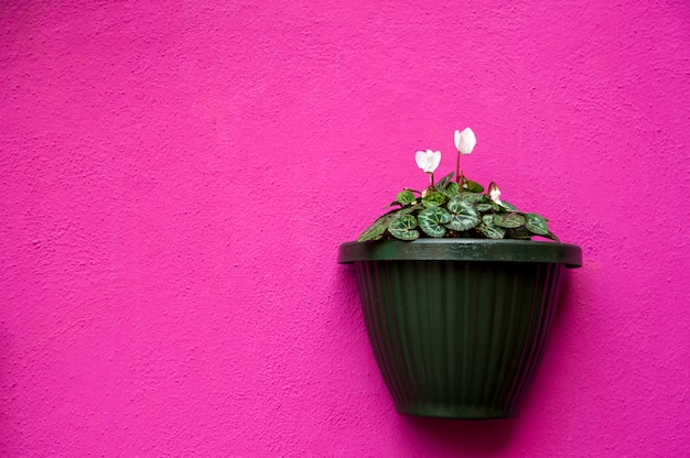Vase sur un mur violet
