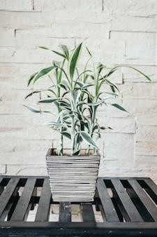 Vase plante arbre