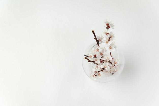 Vase en verre et branche avec des fleurs sur fond blanc. vue de dessus. modèle. copiez l'espace.