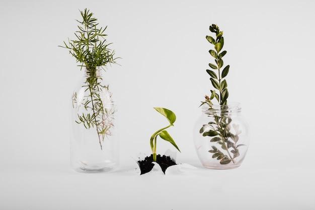 Vases près de petites pousses