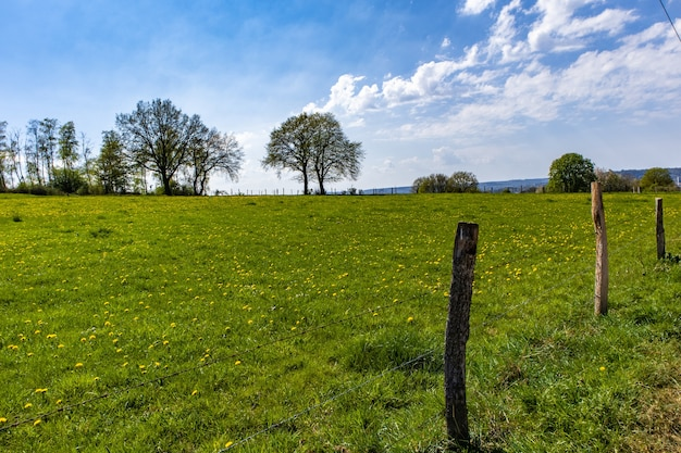 Vaste pelouse verte dans le parc avec quelques arbres et un ciel bleu