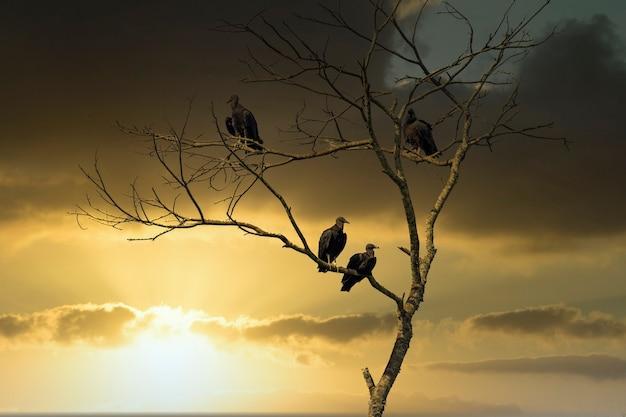 Vautours sur branche d'arbre au coucher du soleil.