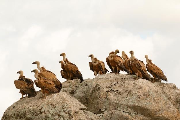 Vautours sur un gros rocher avec le ciel nuageux