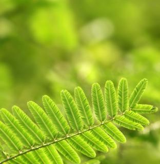Végétarienne feuille verte