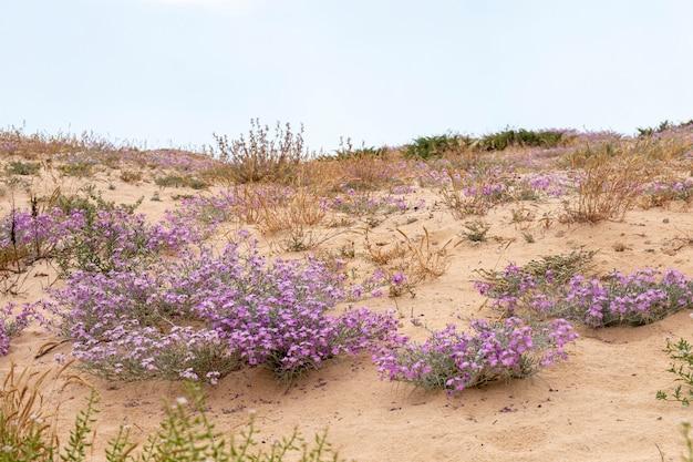 Végétation de dunes de sable