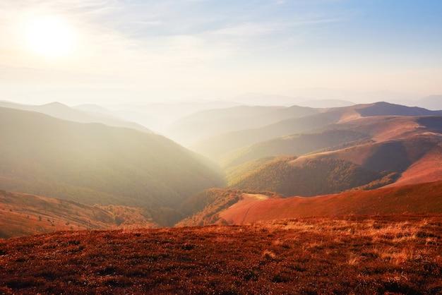 La végétation des hautes terres estivale modeste et les couleurs exceptionnellement belles fleurissent en automne, avant le froid. bleuets rouge vif, vert forêt de conifères, orange buk- montagnes sinie- charme fantastique.