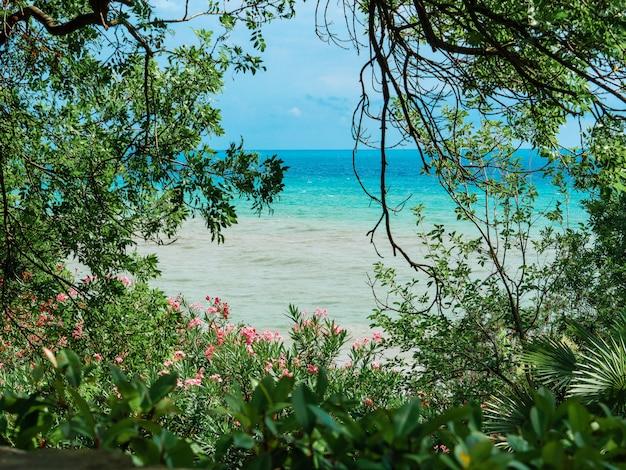 Végétation près de la plage