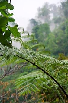 Végétation tropicale à bali