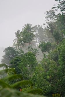 Végétation tropicale dans la brume à bali