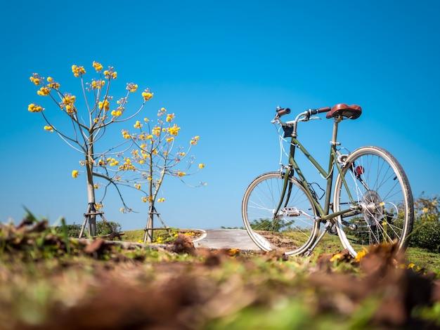 Vélo avec arbres fleuris en garde