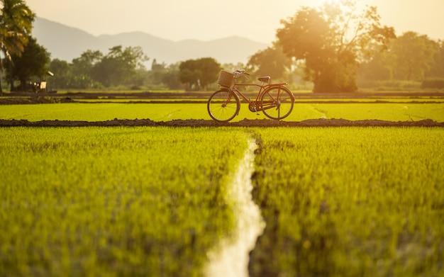 Vélo classique de style japonais rouge au champ vert