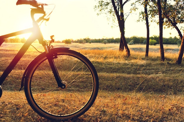 Vélo dans la forêt d'automne au coucher du soleil.