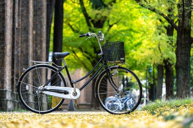 Vélo garé dans le parc, parmi les champs de ginkgo. le bam est plein de jardins.